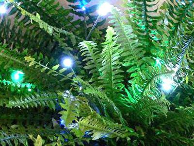 Trồng phong lan dưới ánh đèn LED