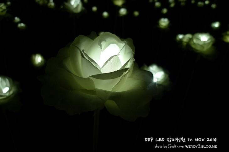 Choáng trước cánh đồng hoa hồng bằng đèn LED tại Hàn Quốc