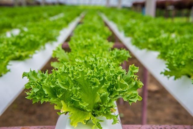 Tham quan nhà máy trồng rau tự động dùng đèn LED tại Nhật