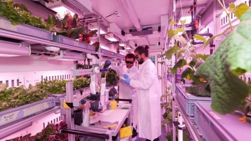 Container trồng rau bằng đèn LED thử nghiệm tại Nam Cực trước khi đưa lên Sao Hỏa