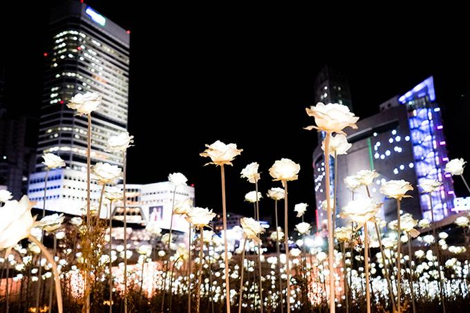 Vườn hoa hồng đèn LED tại Hàn Quốc- nơi anh sáng bất diệt.