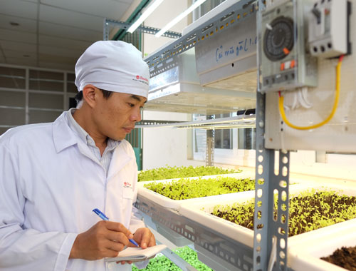 Đèn LED kích thích tăng trưởng cây trồng của nhà khoa học Việt